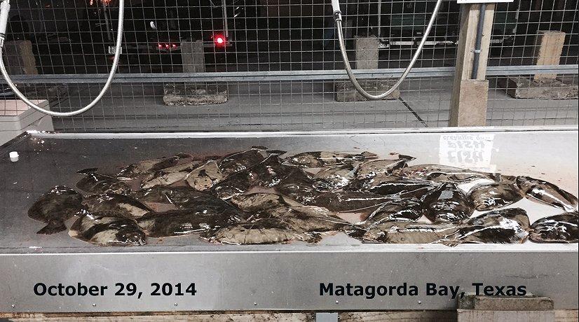 flounder gigging photos: flounder gigs for sale, flounder gigging, Reel Combo